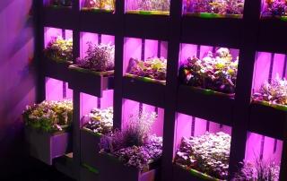 hydroponics-min